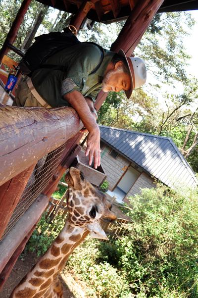 giraffe_healing.jpg